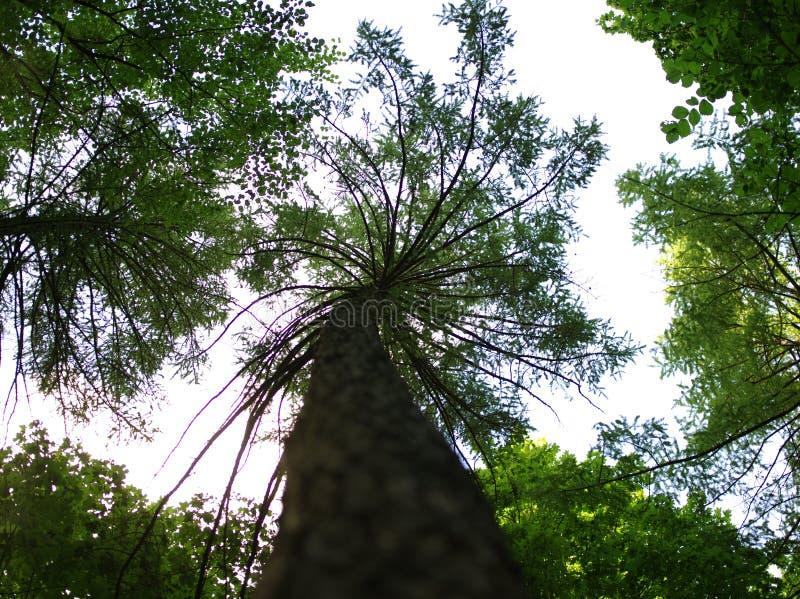 看起来棕榈树,但是它不是 免版税图库摄影
