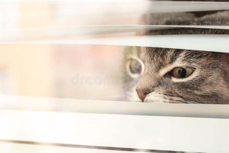 看起来逗人喜爱的虎斑猫外部通过窗口 免版税图库摄影