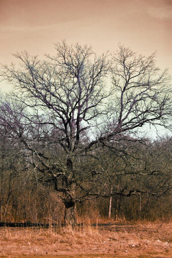 看起来邪恶的结构树 免版税图库摄影