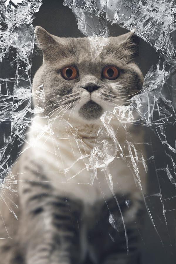 看通过一个残破的窗口的无辜的猫 向量例证