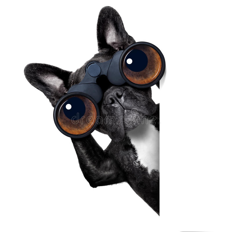 看通过双筒望远镜的狗 库存照片