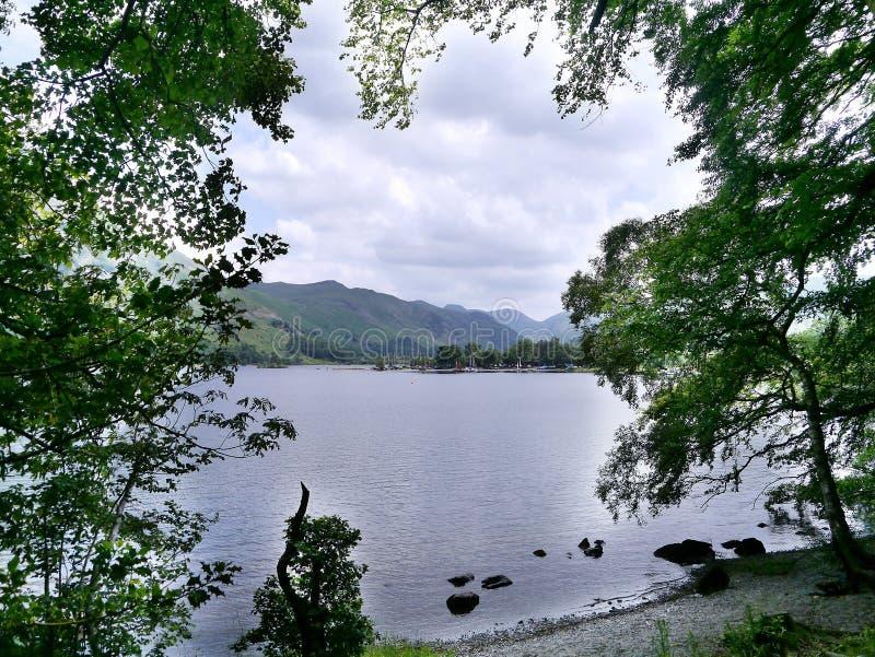 看通过树对阿尔斯沃特湖,湖区 库存照片