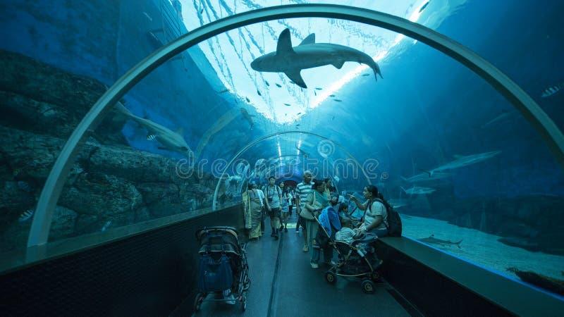 看鲨鱼的拥挤人民 免版税库存图片