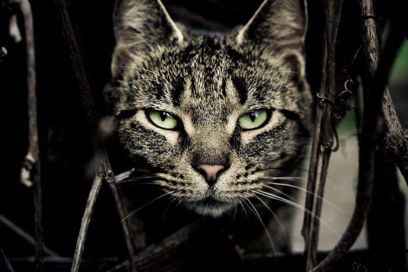 看直接您的猫 库存图片