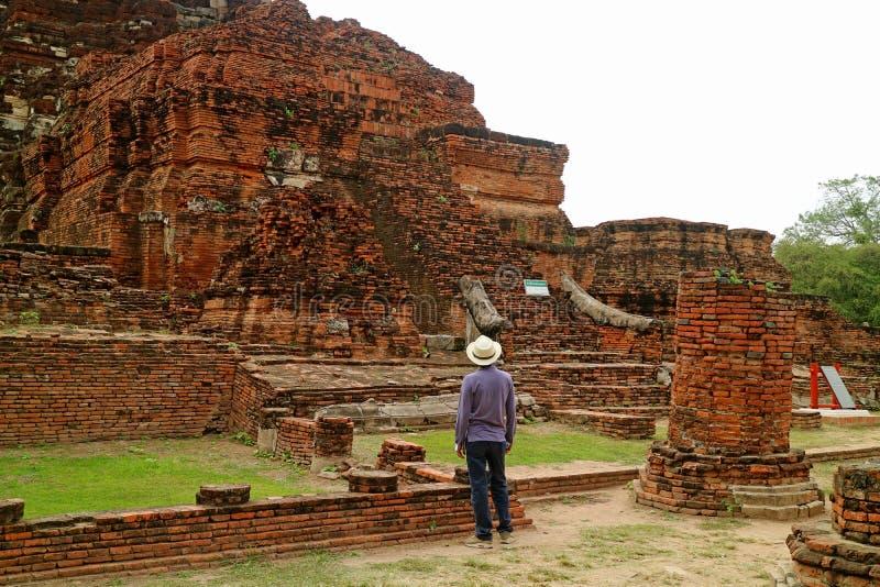 看Wat Mahathat的难以置信的寺庙废墟男性访客在阿尤特拉利夫雷斯历史公园,考古学站点在泰国 图库摄影