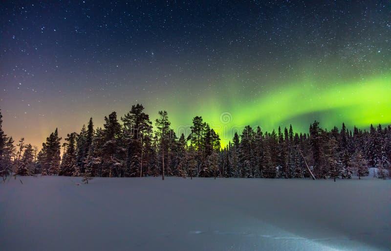 真正的北极光或极光borealis在多雪的森林上 免版税图库摄影