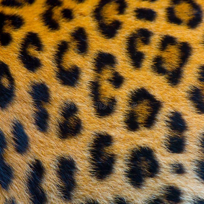 真正的捷豹汽车皮肤 免版税库存照片
