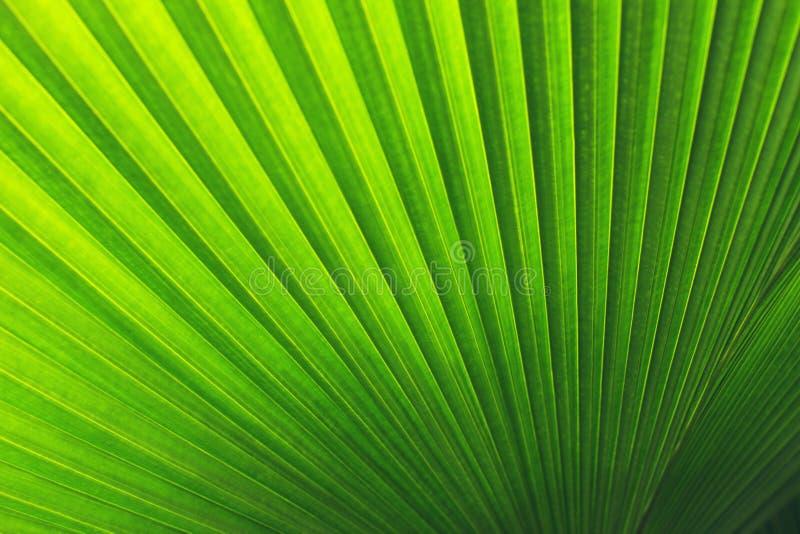 真正的热带叶子背景,密林叶子 库存照片