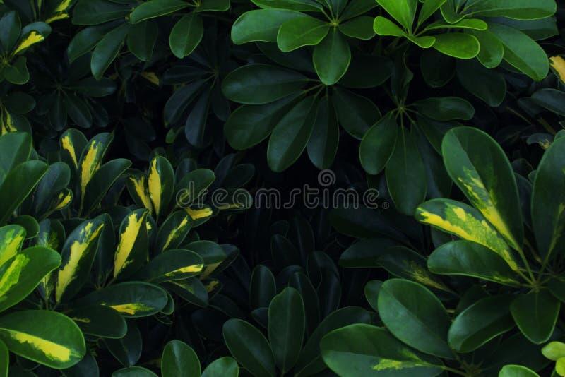 真正的热带叶子背景,密林叶子 图库摄影