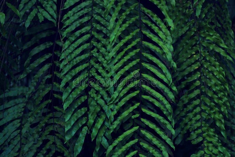 真正的热带叶子背景,密林叶子 库存图片