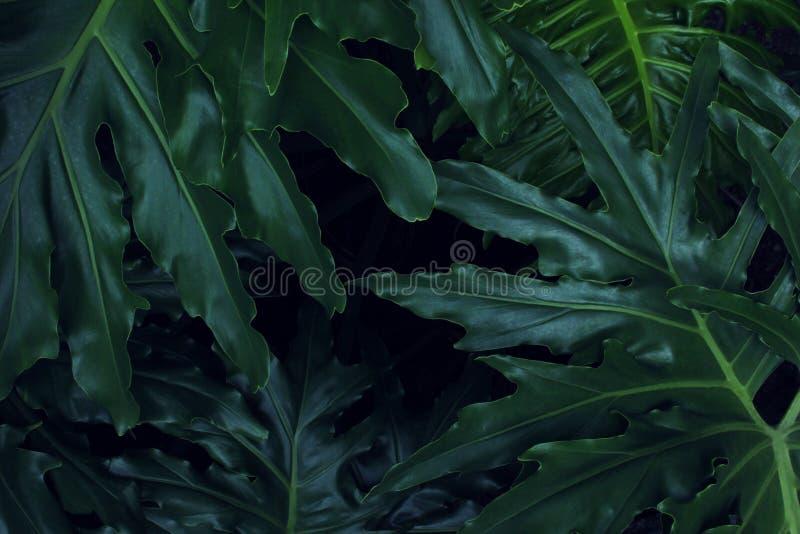 真正的热带叶子背景,密林叶子 免版税库存图片