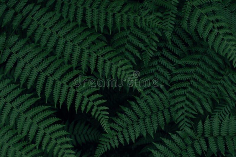 真正的热带叶子背景,密林叶子 免版税库存照片