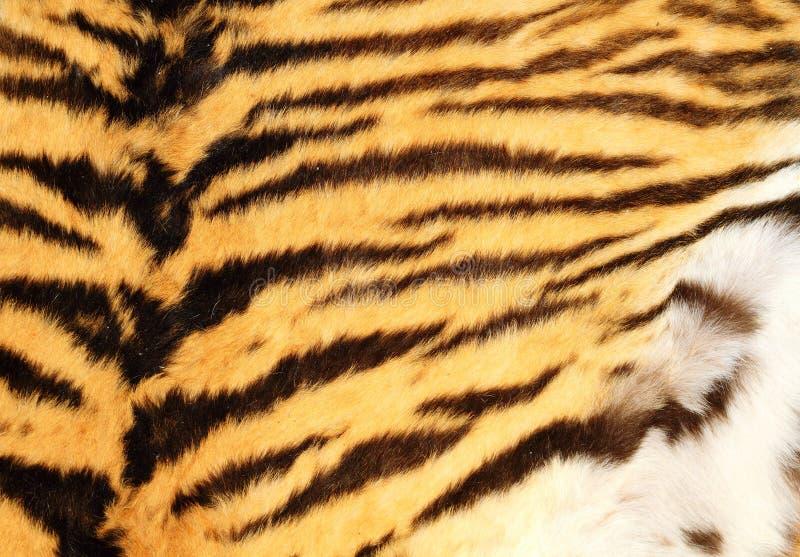 真正的老虎毛皮详细的纹理  库存照片