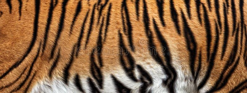 真正的老虎皮肤纹理  免版税图库摄影