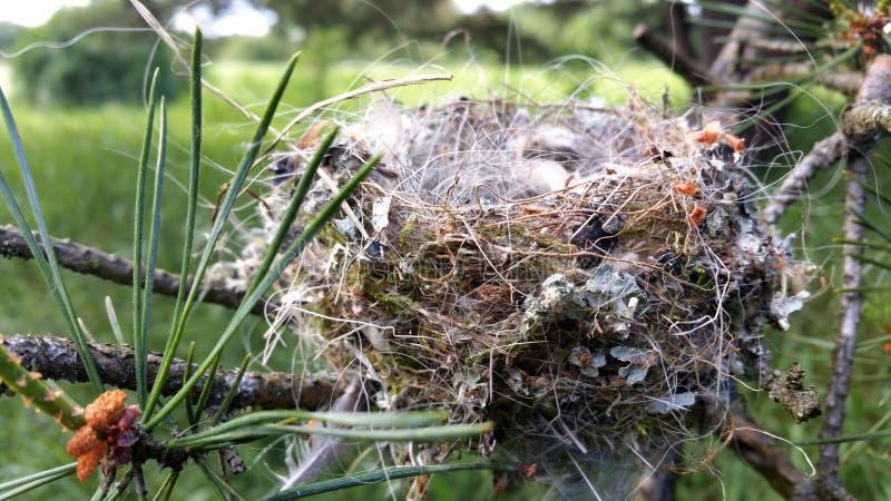 真正的鸟巢在树枝倒空 免版税图库摄影