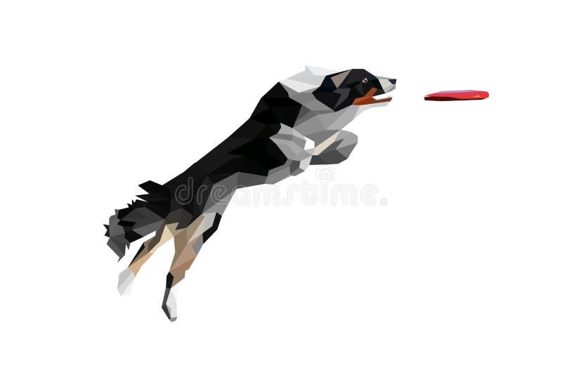 真正看的狗跳跃和传染性的圆盘的低多例证 拿来在白色背景的博德牧羊犬一个圆盘 库存例证