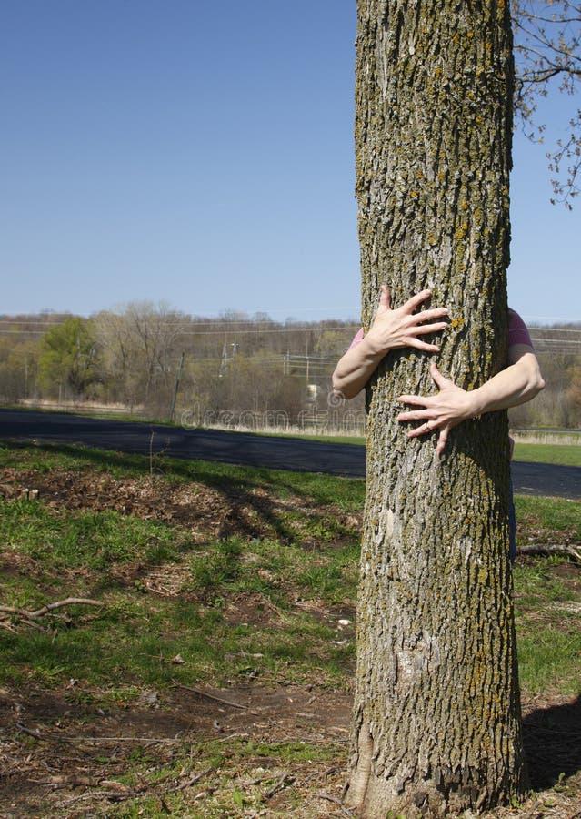 真正hugger结构树 免版税库存图片