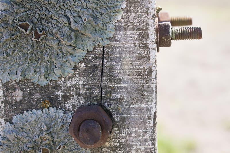 真菌和生锈的钉子 免版税库存图片