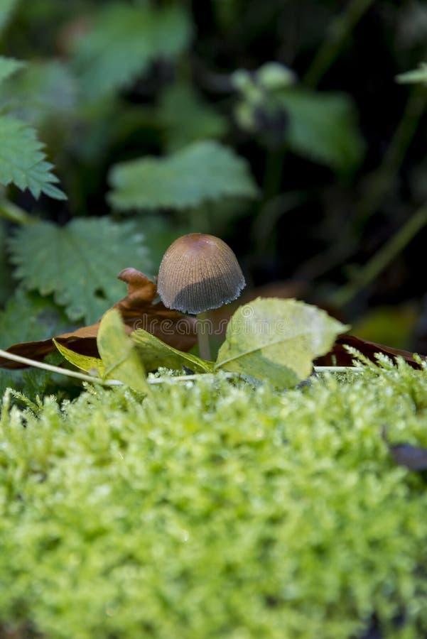 真菌在Savernake森林威尔特郡英国-英国里 免版税库存图片
