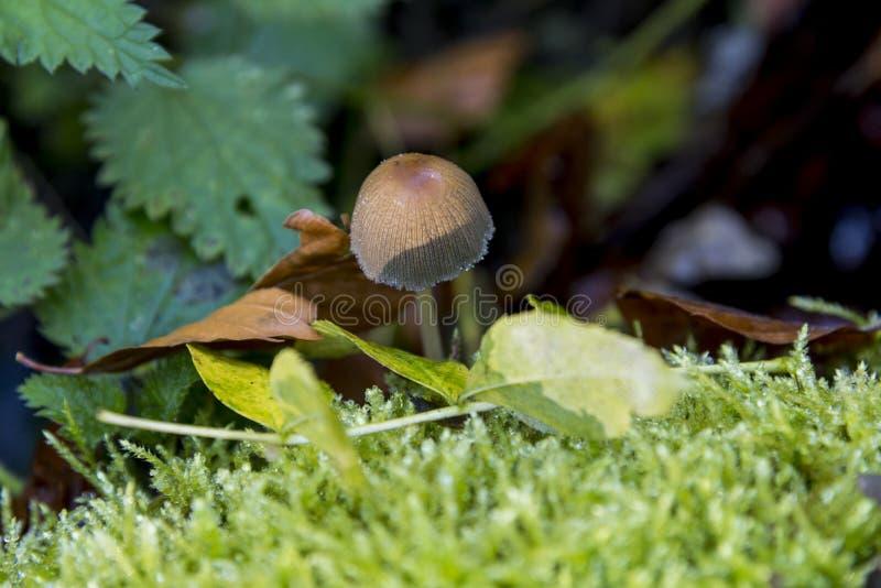 真菌在Savernake森林威尔特郡英国-英国里 免版税库存照片