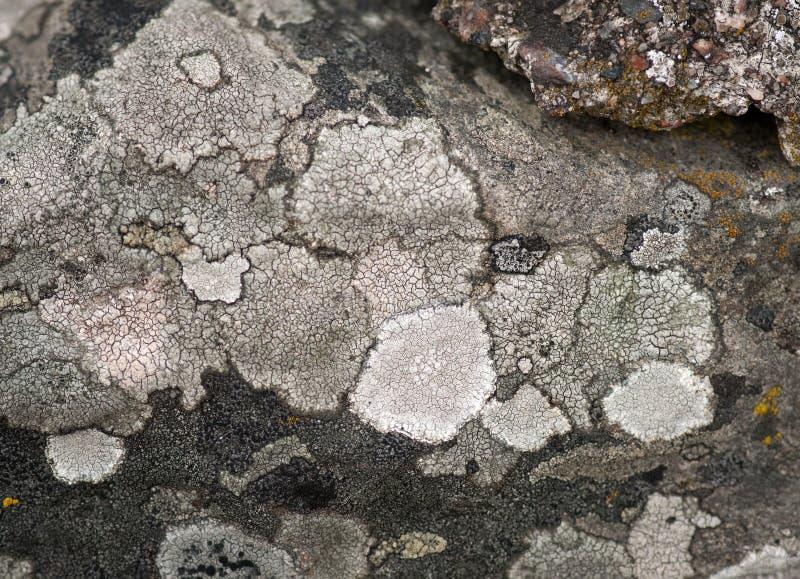 真菌岩石 免版税库存照片