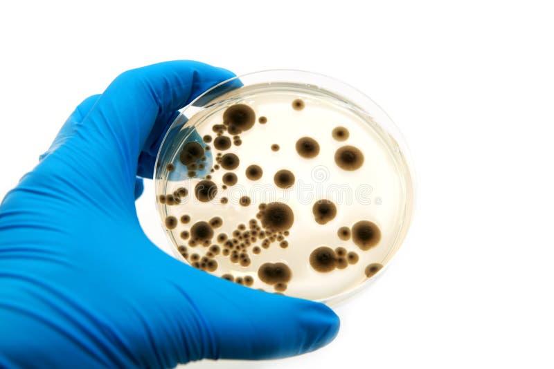 真菌微生物学的牌照 免版税库存图片