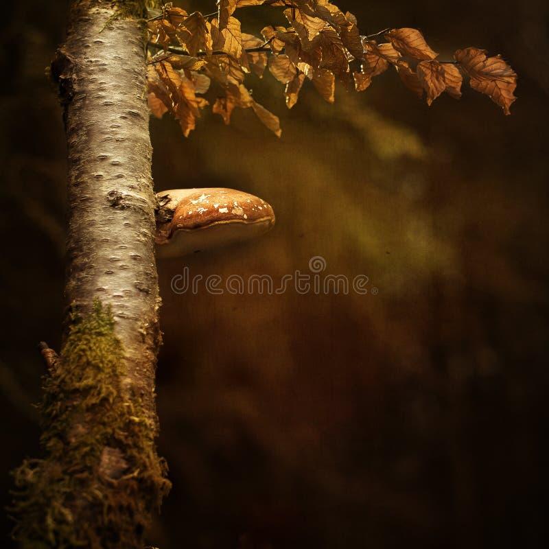 真菌树 免版税库存照片