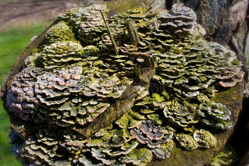真菌森林 免版税库存图片