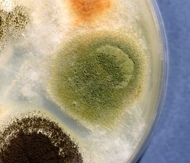 真菌生长 免版税库存照片