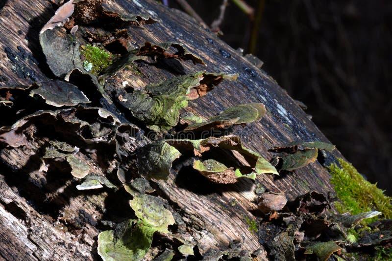 真菌盖了肢体 库存照片