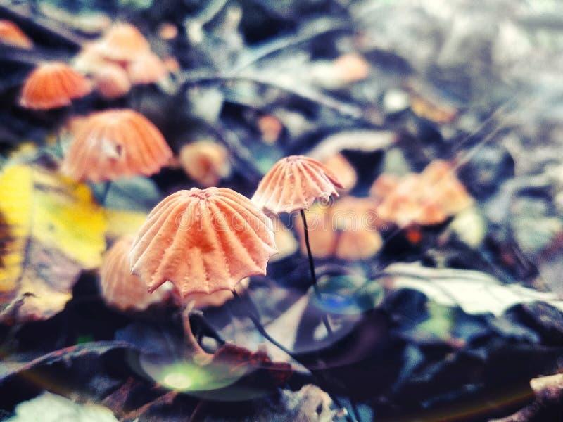 真菌秀丽 库存照片