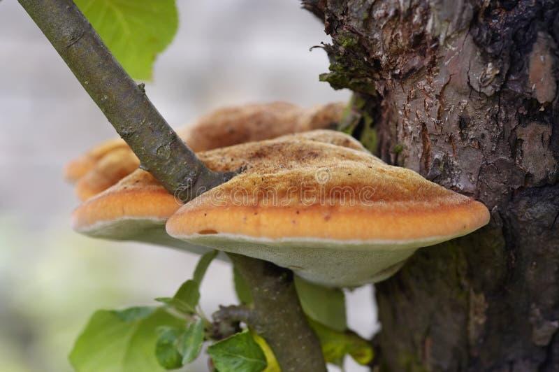 真菌结构树 免版税库存照片