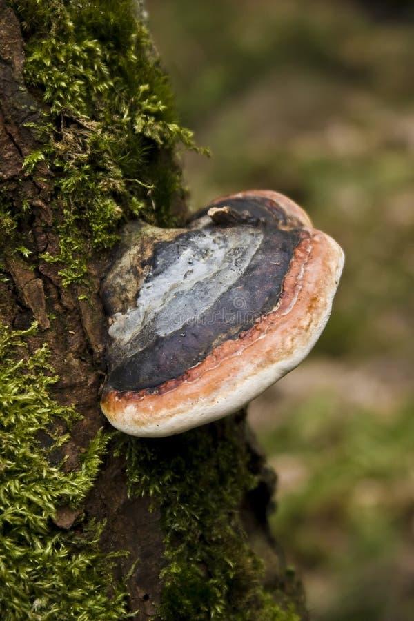 真菌结构树 库存图片