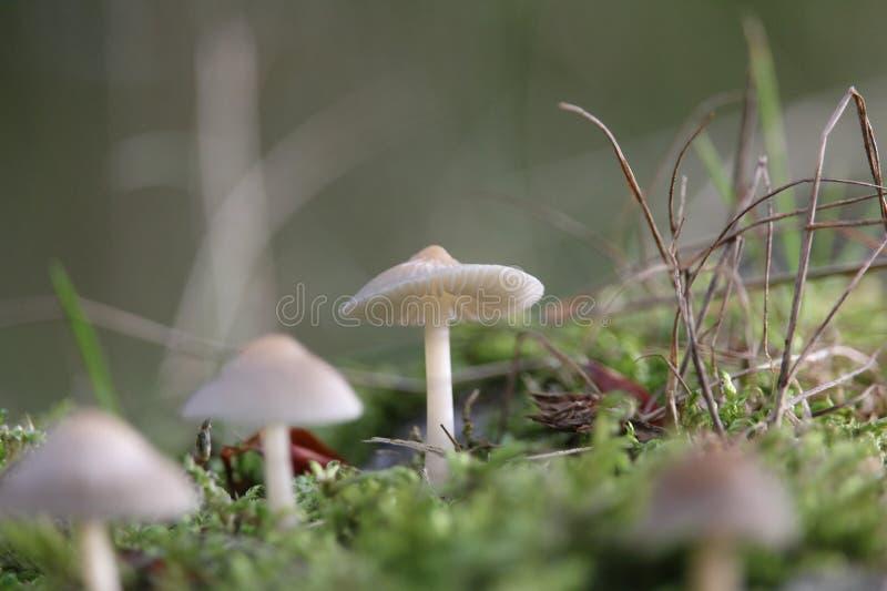 真菌蘑菇 免版税图库摄影