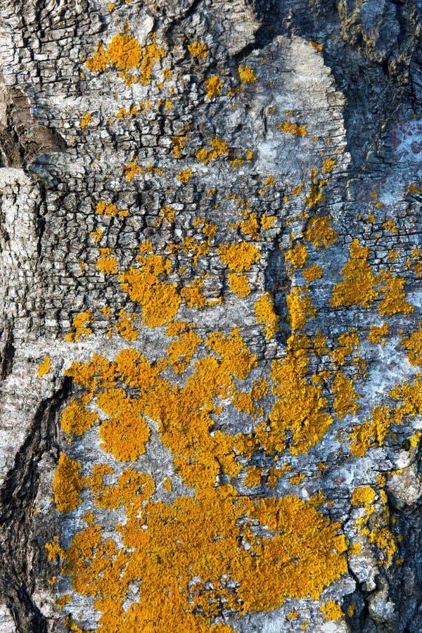 真菌黄色 免版税库存图片