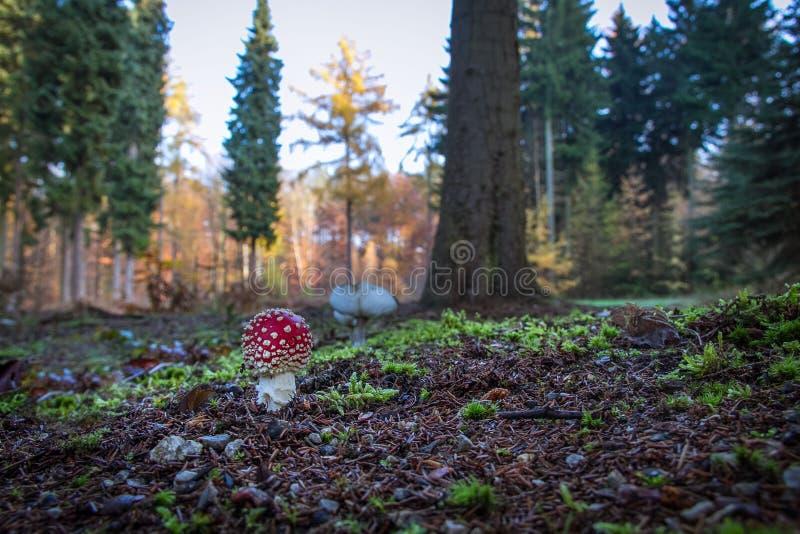 真菌 免版税库存照片