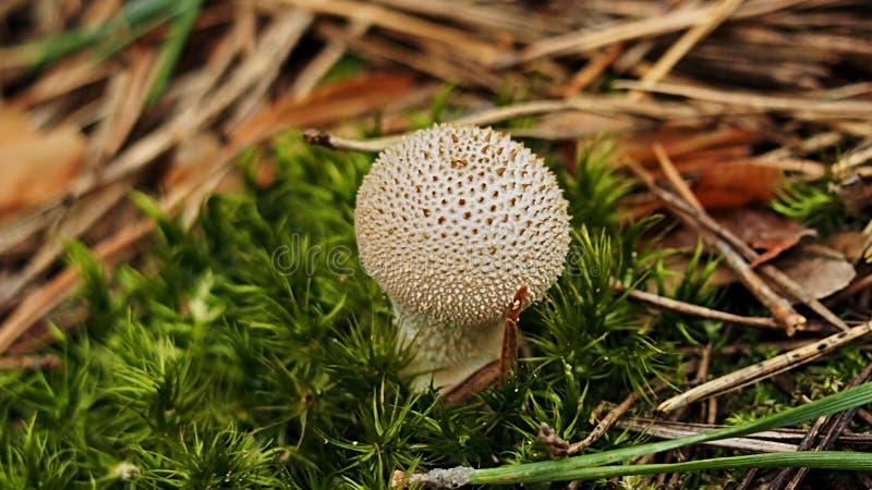 真菌 库存照片