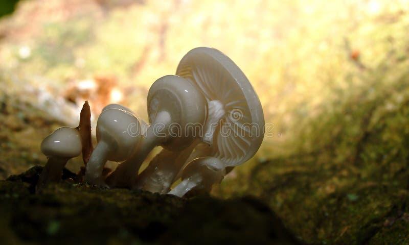 2真菌 图库摄影
