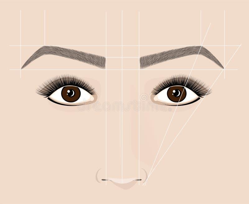 眼眉古典形状  Microblaining和永久构成 正确建筑的计划 库存例证