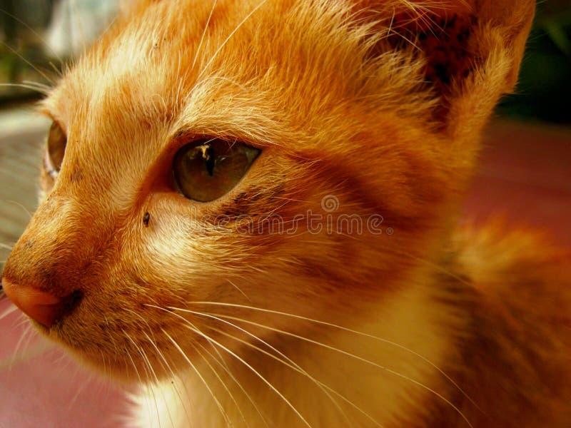 眼睛猫 库存照片