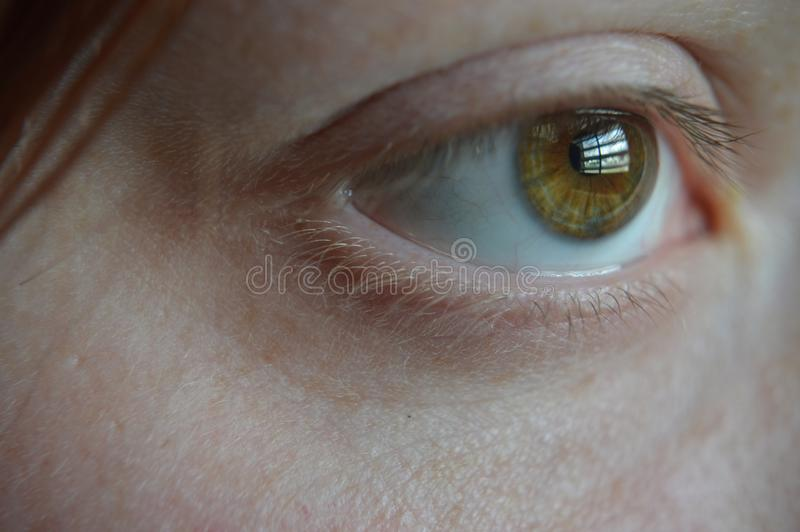 眼睛看见您 库存照片