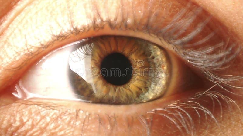 眼睛虹膜收缩