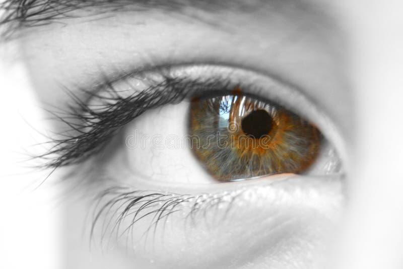 眼睛魔术 免版税库存图片
