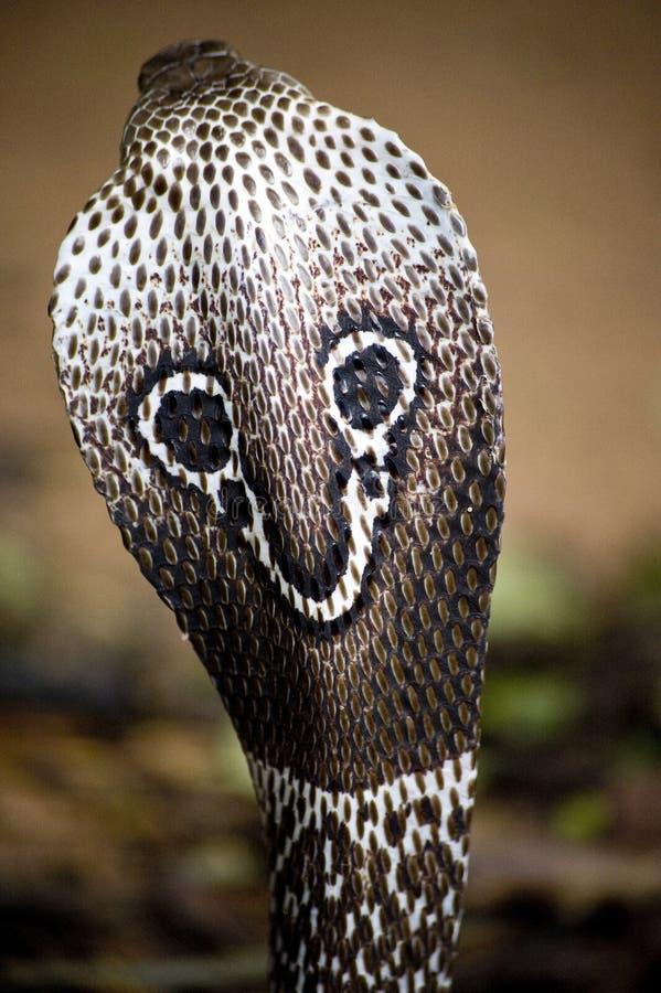 眼镜蛇印地安人 免版税库存图片