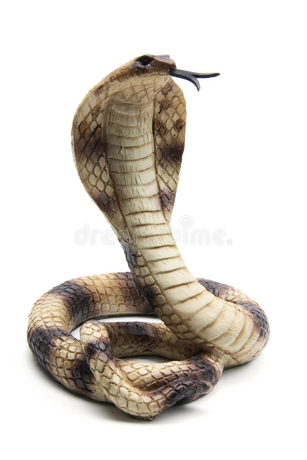 眼镜蛇 免版税库存照片
