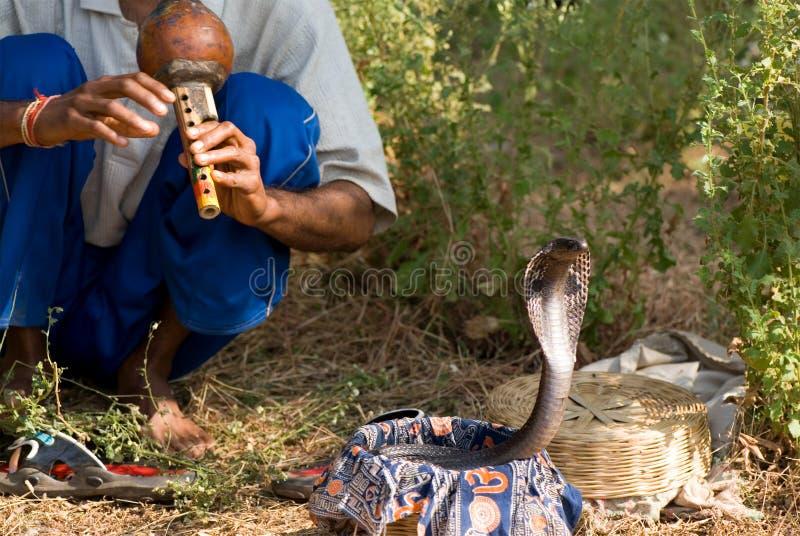 眼镜蛇 免版税图库摄影