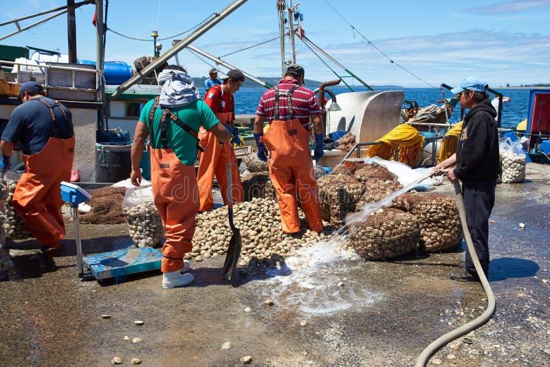 着陆蛤蜊 图库摄影