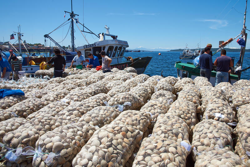 着陆蛤蜊 免版税图库摄影