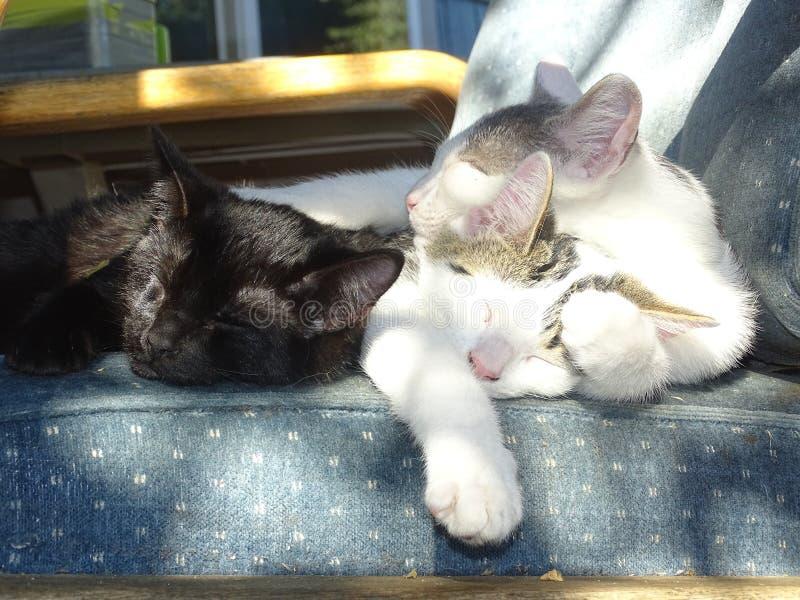 睡在椅子上的猫 免版税库存图片