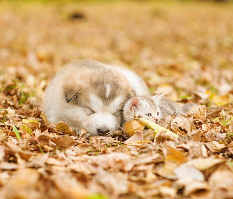 睡眠小狗和小的小猫在下落的叶子 免版税库存图片